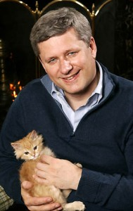 stephen-harper-kitten